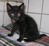 Katzen-Baby