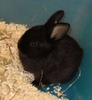Kaninchenbaby