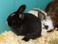 Kaninchenbabies